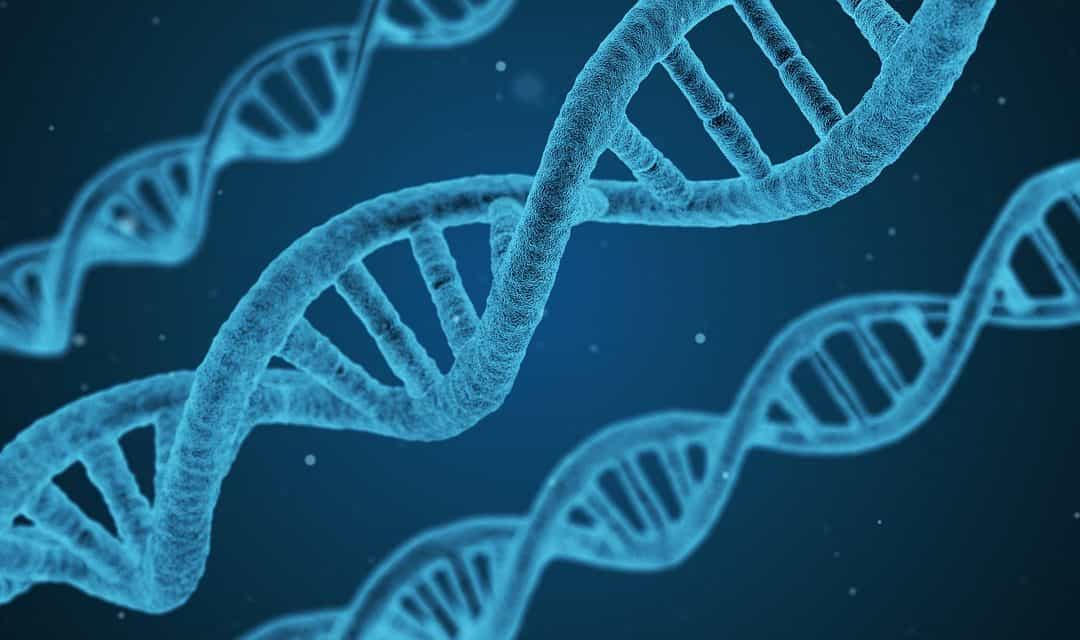 Your Guide to the MTHFR Gene Mutation