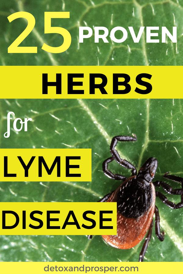 25 Herbs for Lyme Disease