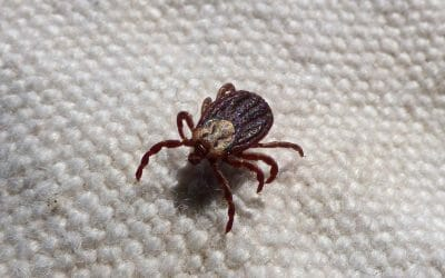 Master List of Herbs for Lyme Disease