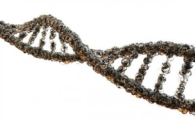COMT Gene and Its Impact on Your Brain